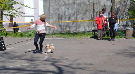 Собачий екзамен в Кам'янському