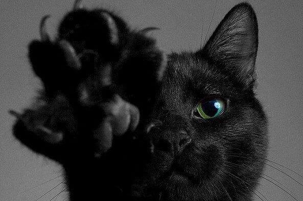 Вбивство кішки в Кам'янському поліція, на думку заявниці, «спускає на гальмах»