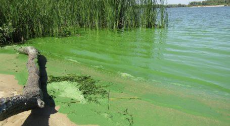 Чим можуть заразитись мешканці Кам'янського під час купання
