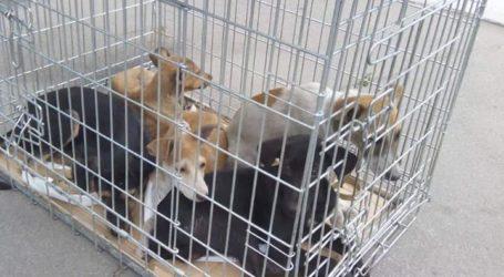 Зоозахисники з Кам'янського повернули до міста більшість відловлених на ДМК собак