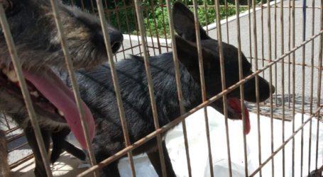 Собаки, виловлені на ДМК, повернулись до Кам'янського