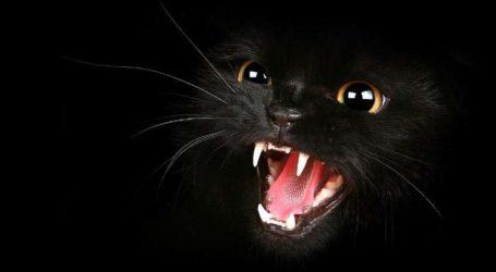 «Справа чорної кішки»: розслідування знову поновлено