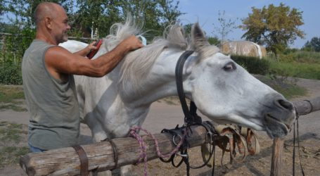 Мрії про коней оживають поблизу Кам'янського