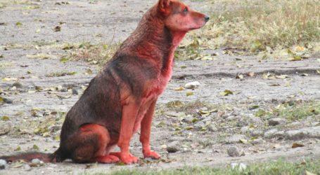 Тваринами в Кам'янському займатиметься новостворене КП «Фауна міста»