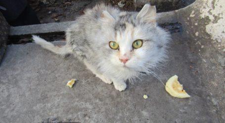 Про права котів як елементу екологічної системи Кам'янського