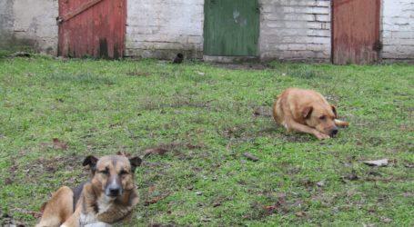Собачий притулок в Кам'янському: факти, нормативи та перспективи