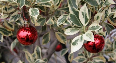 Підготовка новорічних святкувань та старт прийому проектів бюджету участі в Кам'янському