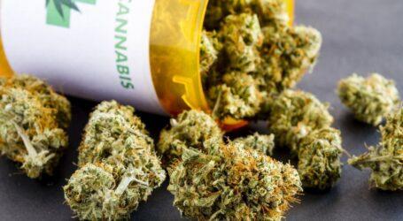 Коноплі в уяві мешканців Кам'янського: від медичної сировини до «наркоти»