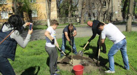 Озеленення в Кам'янському цього року пройде без висадки нових дерев