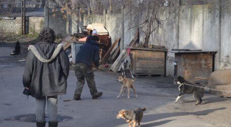 Карантин та собачі справи в Кам'янському: вся надія – на волонтерів
