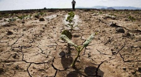 Прогнозована посуха може залишити дачників Кам'янського без води
