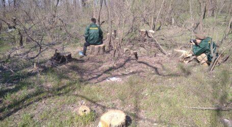 «Антиекологічною» назвали експерти нову Програму діяльності Кабміну України