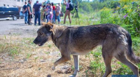 Притулок  – крок до вирішення проблеми нічийних тварин в Кам'янському