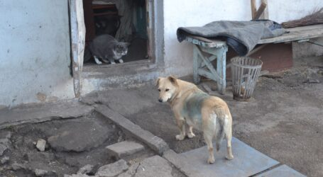 Центр допомоги тваринам буде створено в Кам'янському