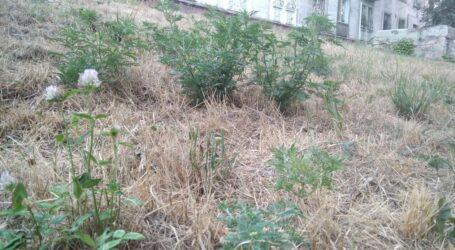 Про небезпеку сезонної алергії попереджають лікарі Кам'янського