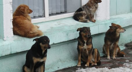 Неприбуткову комунальну установу — «Притулок для тварин» — утворила міськрада Кам'янського