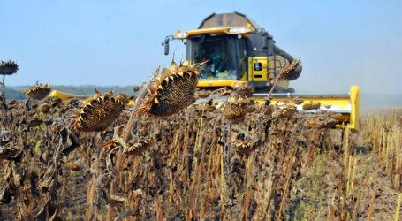 Україна втрачає врожай соняшників та валюту