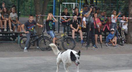 Компенсацію за укус безпритульної собаки відсудила мешканка Кам'янського