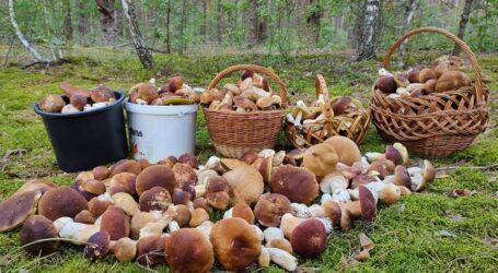 Посуха відсуває початок грибного сезону на Дніпропетровщині
