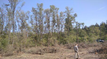 Про санітарні вирубки та підтоплення територій в околицях Кам'янського