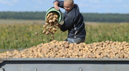 Україна імпортує картоплю з Європи через високі внутрішні ціни