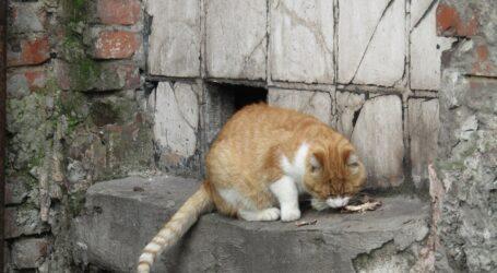 Чи пускати котів у підвали, сперечаються мешканці Кам'янського
