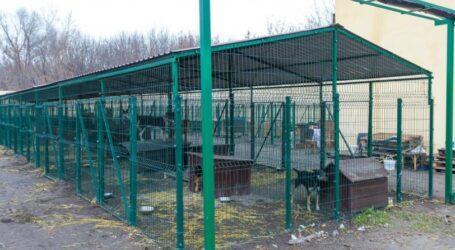 Как функционирует приют для животных в Каменском (видео)