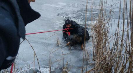 У Дніпрі надзвичайники врятували собаку, який провалився під кригу