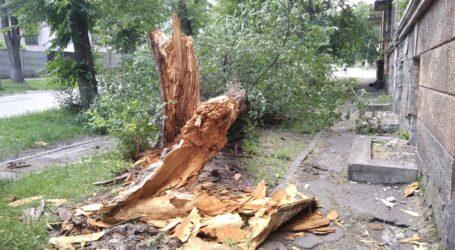 Зміни клімату загострюють проблему аварійних дерев в Кам'янському