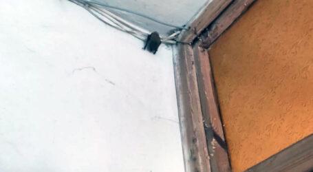У Дніпрі четверо рятувальників виловлювали кажана у під'їзді