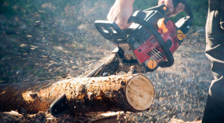 На Дніпропетровщині спіймали незаконних лісорубів