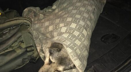 У Кам'янському поліцейські врятували песика