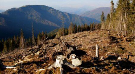 В Україні стали більше уваги приділяти злочинам проти довкілля
