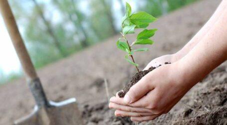 Цьогоріч на Дніпропетровщині планують висадити майже 1,5 млн дерев