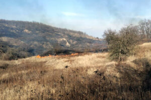 На Дніпропетровщині 8 разів горів сухостій - ФОТО