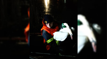 На Дніпропетровщині п'ятеро надзвичайників рятували вмерзлого в кригу лебедя