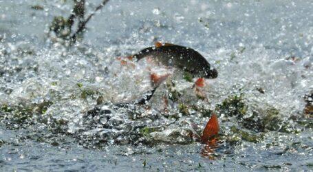 З 1 квітня заборонено ловити рибу