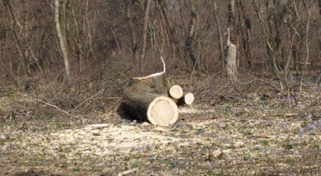 """На Дніпропетровщині затримали """"чорних лісорубів"""""""