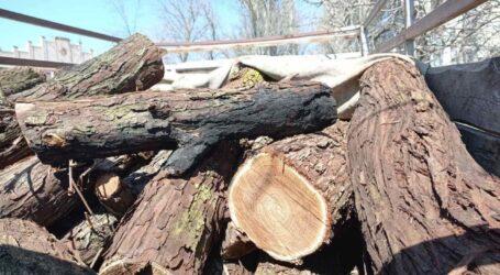 На Дніпропетровщині затримали двох чоловіків за незаконну вирубку дерев