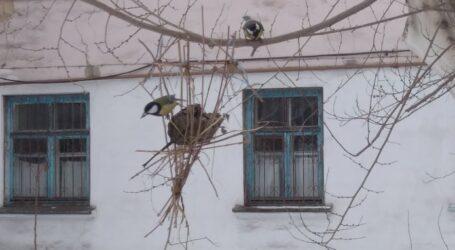Берегти птахів в Кам'янському рекомендують біологи