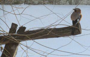 Берегти птахів в Кам'янському рекомендують біологи - ФОТО