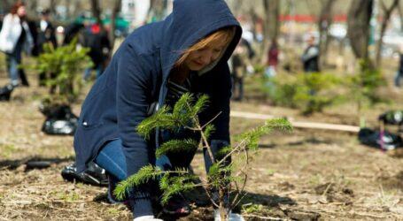 Один мільйон дерев за добу: Дніпропетровщина приєднається до екологічої акції
