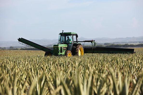 Дніпропетровщина очолила всеукраїнський рейтинг виробників сільського господарства