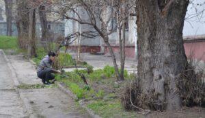Здичавіння територій та стихійне озеленення в Кам'янському - ФОТО