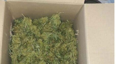 У Кам'янському поліцейські вилучили у містянина марихуану