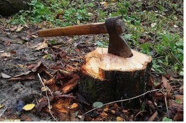 За незаконну порубку лісу двоє приятелів опинилися на лаві підсудних