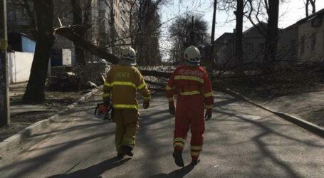 У Дніпрі п'ятеро рятувальників прибирали дерево з проїжджої частини