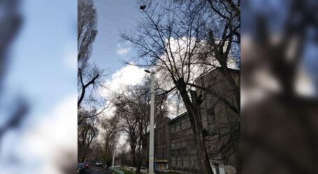 У Дніпрі п'ятеро надзвичайників рятували кота, який не міг злізти з дерева