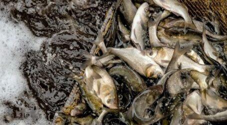 За два тижні нересту на Дніпропетровщині затримали майже 100 браконьєрів
