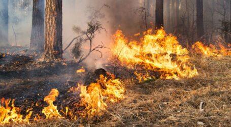 Цієї весни в екосистемах Дніпропетровщини сталося 620 пожеж
